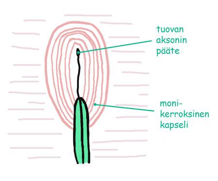 Hermopääte