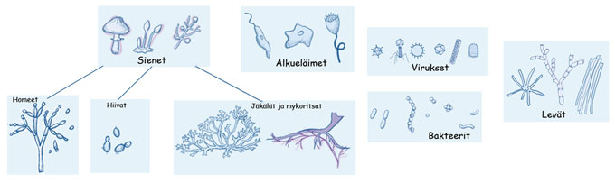 Mikrobit hajottajina