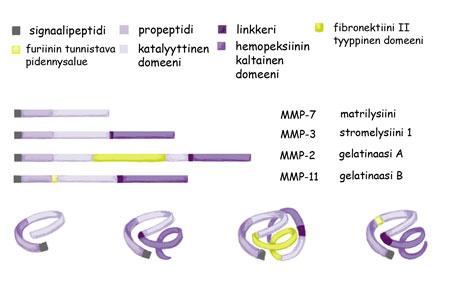 Solun proteiinit